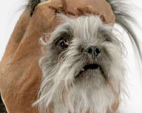 Imperial March…Sung By Dogs
