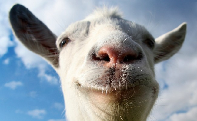GOAT SIMULATOR Getting New Multiplayer Mode
