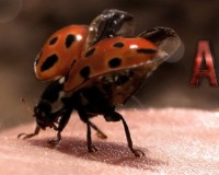 Kevin Fiege Gives Update On Ant-Man