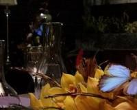 """HANNIBAL """"Savoureux"""" Review"""